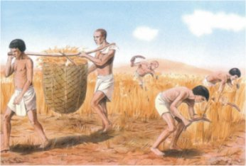 agriculteur2.jpeg